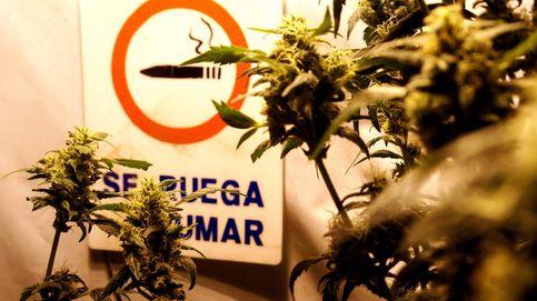 Contra los cárteles de la droga: legalización