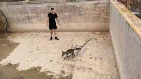 Rescate de tres zorros de una balsa en Valencia