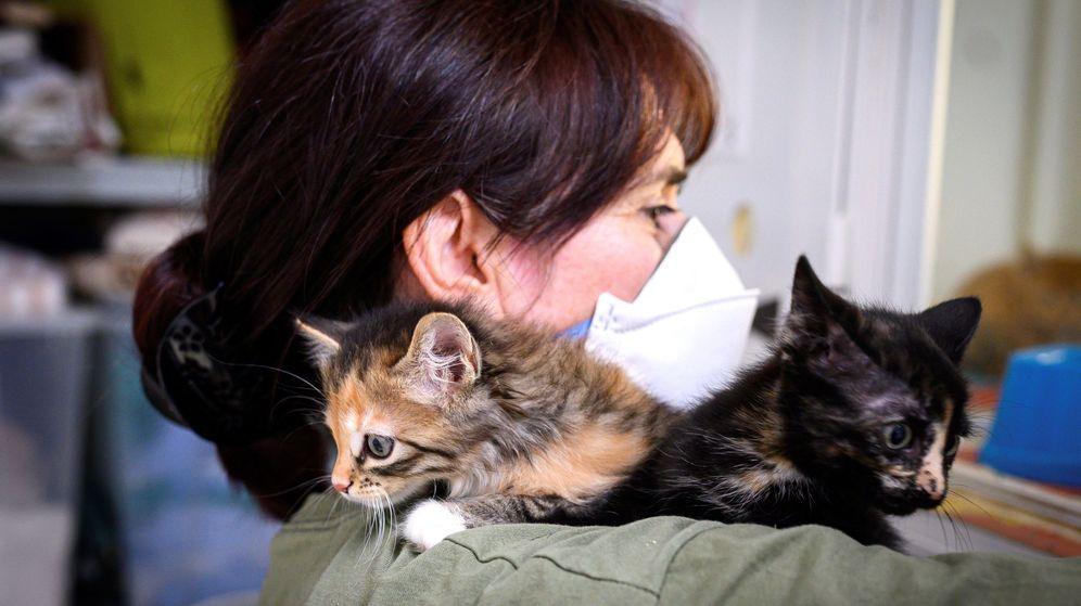 Foto: Convivir con sus mascotas ha ayudado a muchas personas a combatir la soledad (EFE/Fernando Villar)