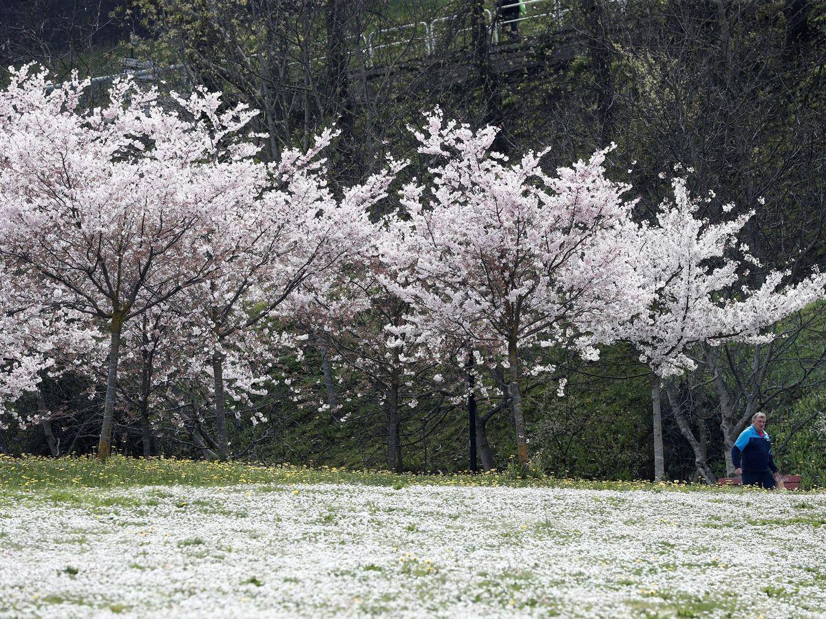 Foto: La elección de qué tipo de árbol plantar condiciona la efectividad de los mismos frente a la contaminación. Foto: EFE Jesús Diges