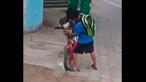 Un niño pone la mascarilla a su perro para ir de paseo en bicicleta