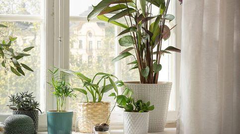 7 macetas bonitas y 7 plantas de otoño para llenar de flores tu casa