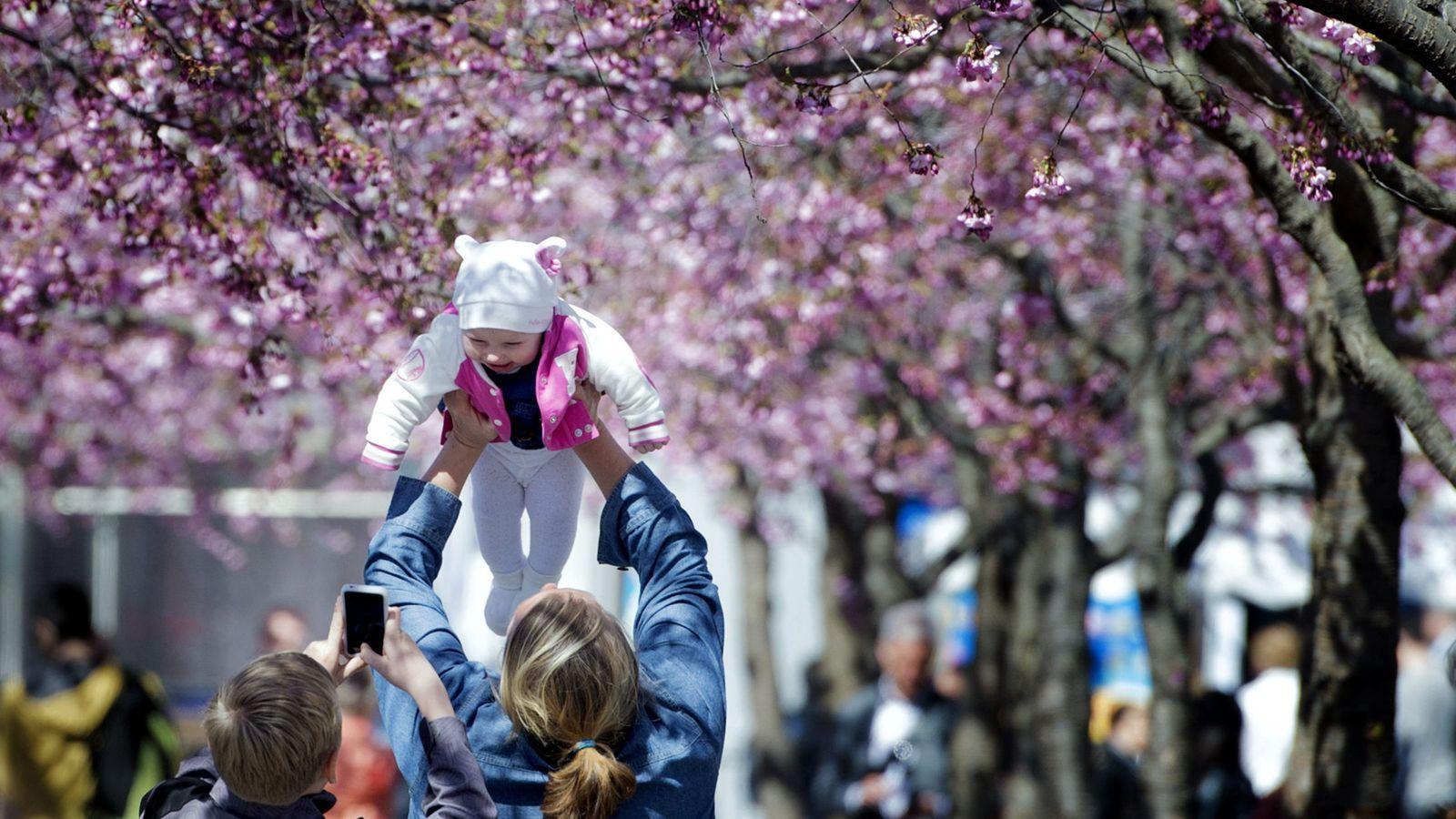 Foto: Un joven fotografía a un bebé junto a su familia en el parque Kungstradgarden, en el centro de Estocolmo (Reuters).