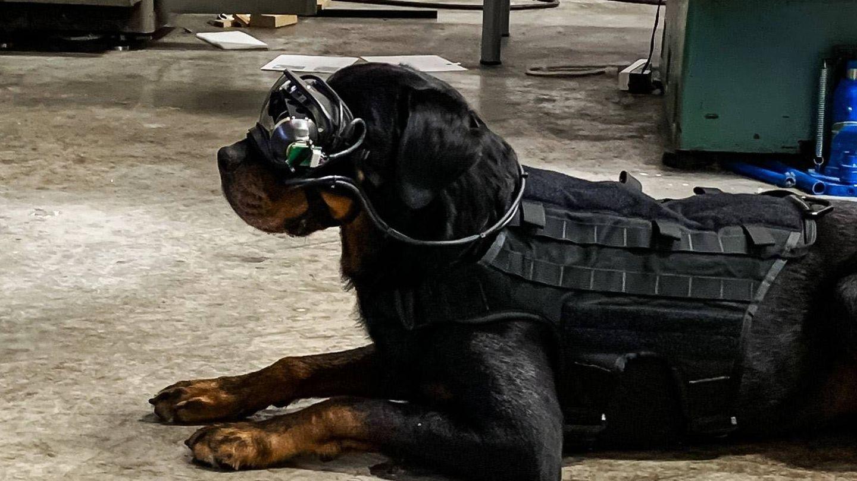 Pruebas de las gafas de realidad aumentada con un perro militar. (US Army)