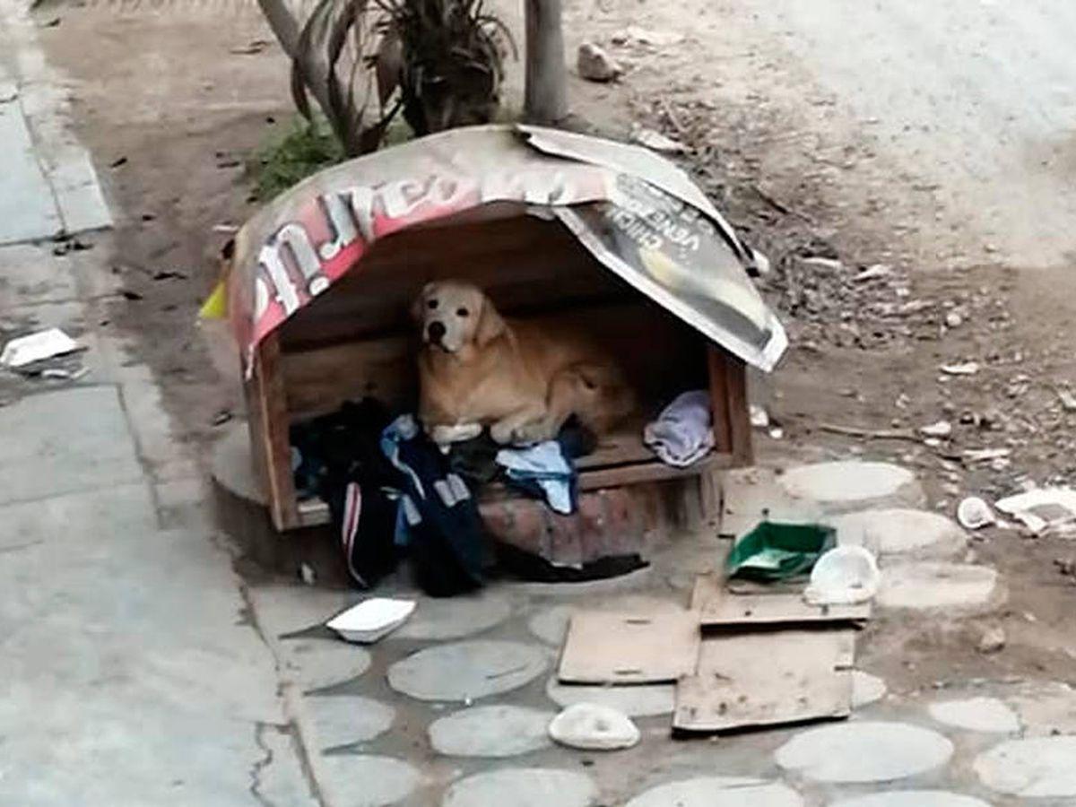 Foto: Rodolfo vive en la caseta de madera que le construyeron sus propios vecinos (Foto: Facebook)