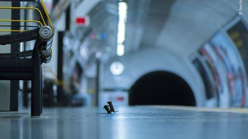 Cómo una foto del Metro de Londres ganó un premio de naturaleza