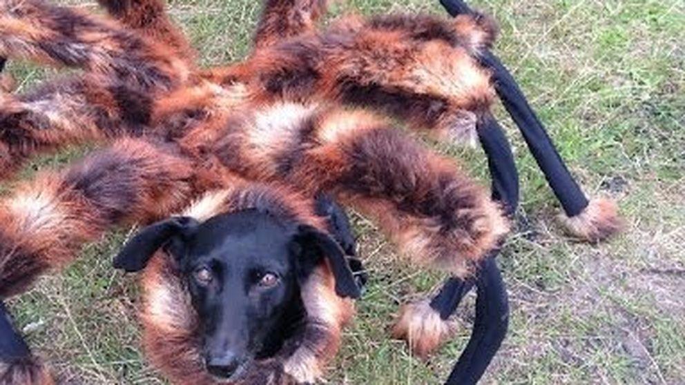 Un perro-araña anda suelto