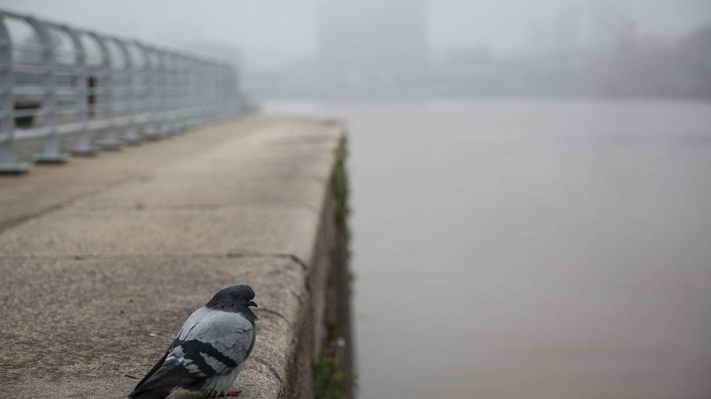 Foto: Espesa niebla cubre los cielos de buenos aires