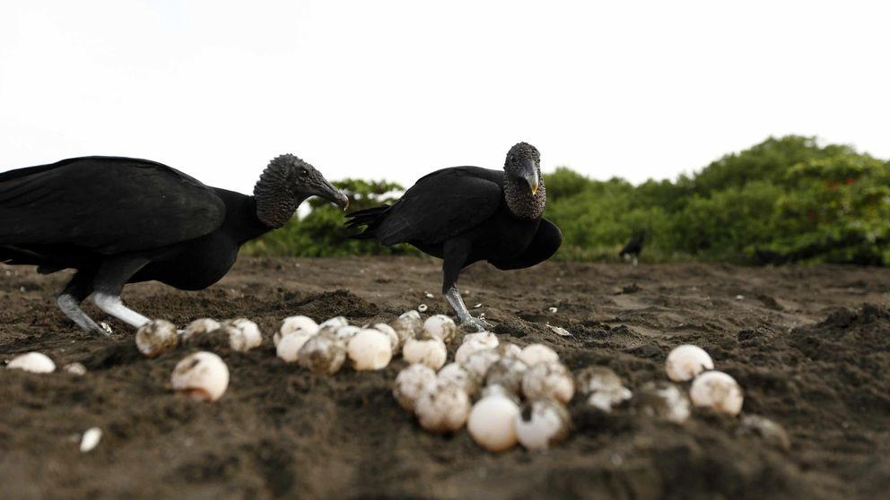 Encuentran plásticos dentro de los huevos de las aves en pleno Océano Ártico