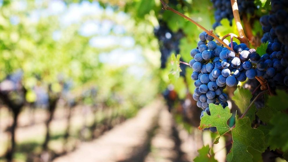 O Vine, la mezcla entre el agua de manantial y el vino tinto