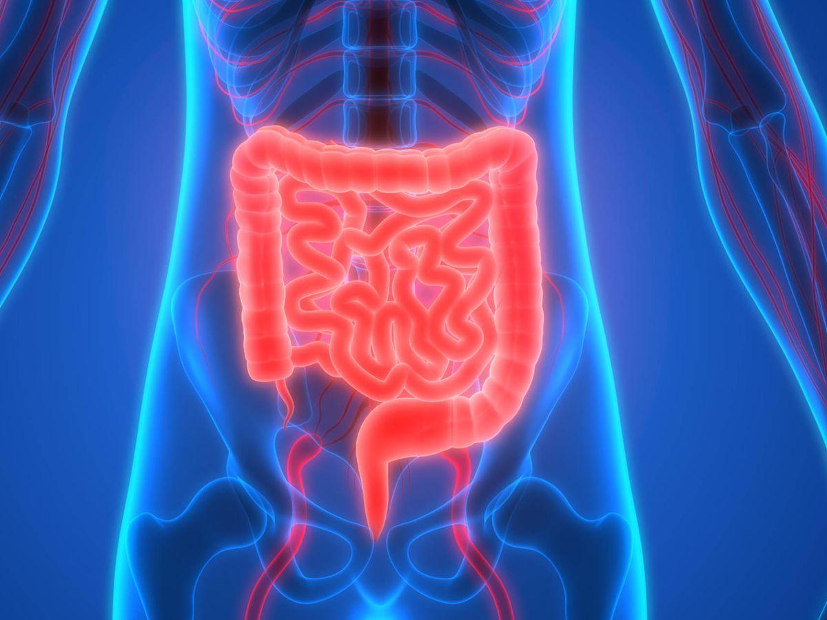 Foto: Sistema intestinal. (iStock)