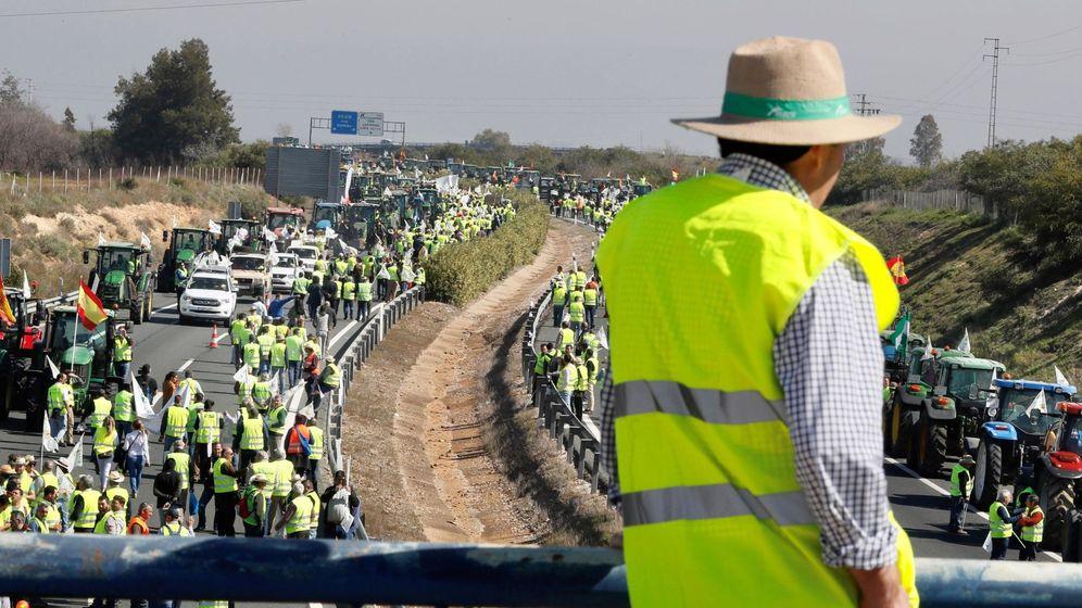 Foto: Tractorada de agricultores y ganaderos cortan carretera A-4 (EFE)