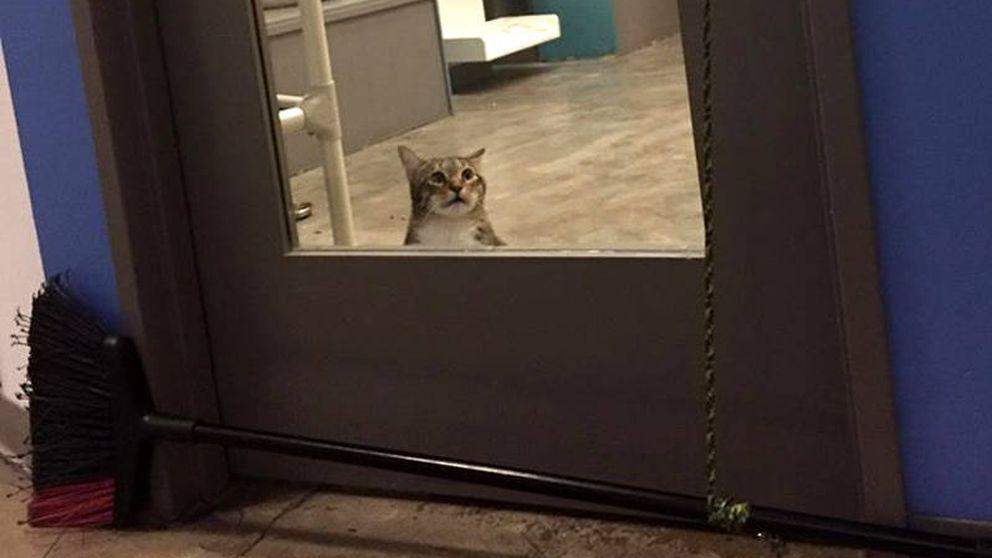 Castigan a un gato por abrir la puerta y dejar salir del refugio al resto de felinos