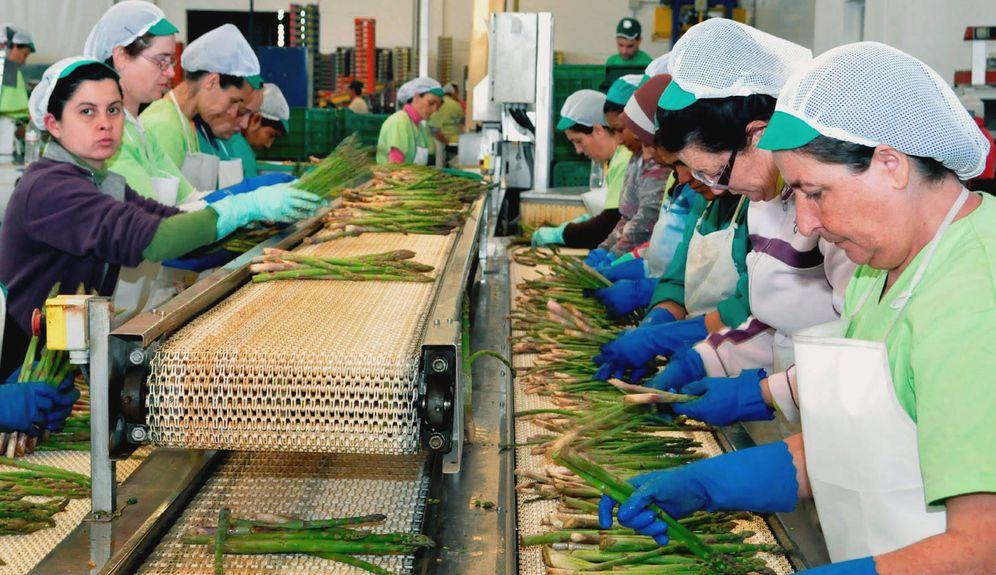 Foto: Trabajadoras seleccionando espárragos en Granada. (Foto: EFE)