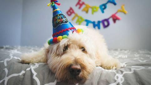 La fiesta de cumpleaños de la perra Moka que es viral en TikTok