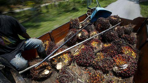Viviendo del aceite de palma