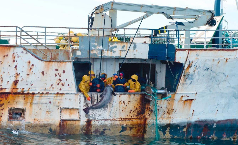 Foto: Pesca de merluza negra en la Antártida en el 'Kunlun', un buque de los Vidal, fotografiada por una patrullera de Nueva Zelanda.