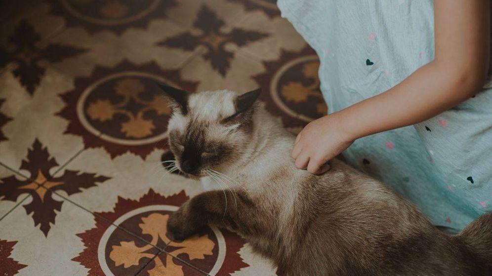 Foto: Una mujer acaricia a su gato (PxHere)