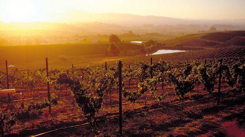 Vinos de california: el sueño americano conquista el mundo vinícola