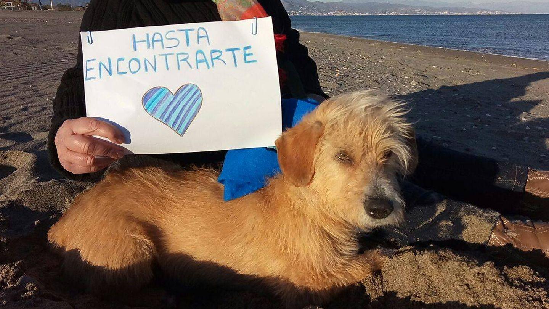 Smoky salió con Antonio el 22 de enero; el 4 de febrero apareció el perro malherido sin el joven. (Foto cedida por la familia)