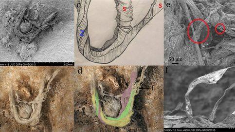 Una cuerda sugiere que los neandertales eran más inteligentes de lo que pensábamos