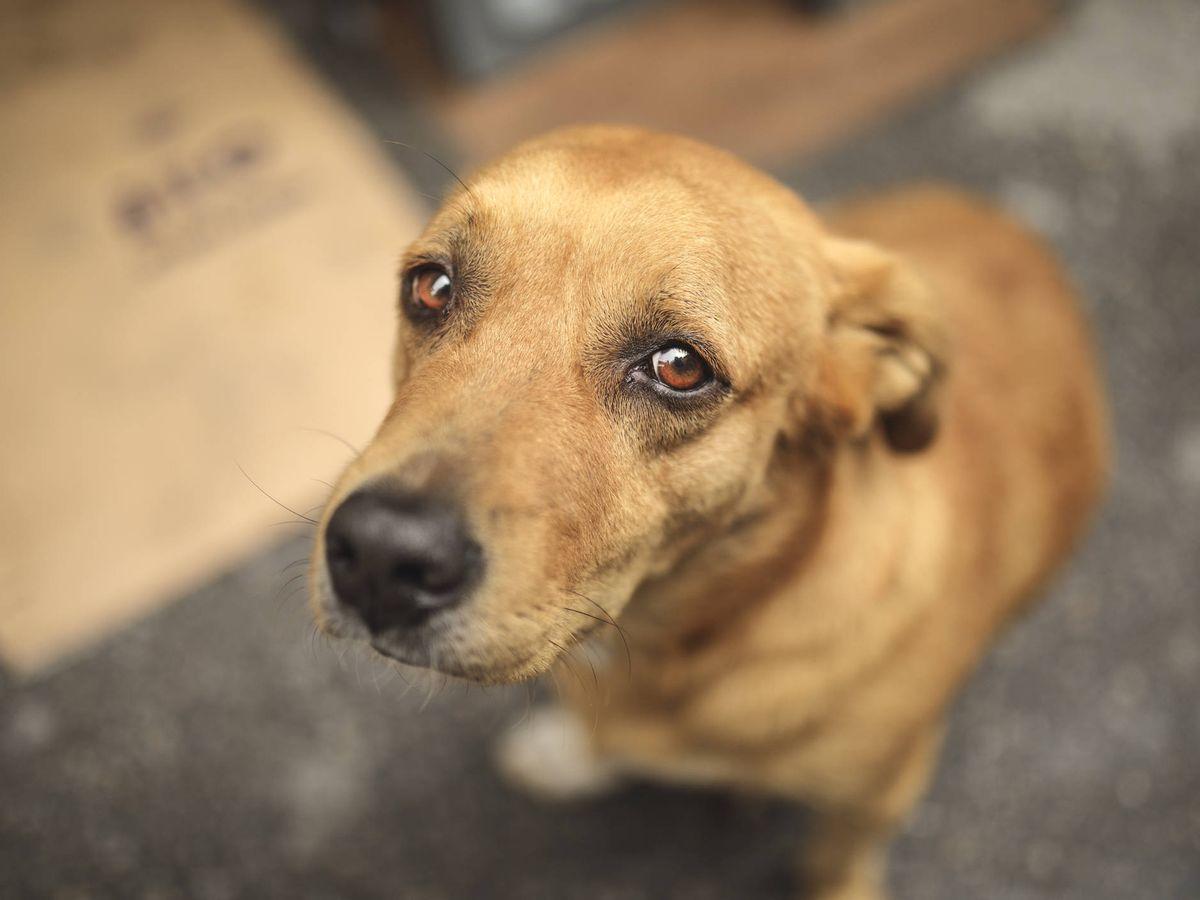 Foto: Las autoridades de Bourke no dejaron que los voluntarios recogieran a los animales (iStock)