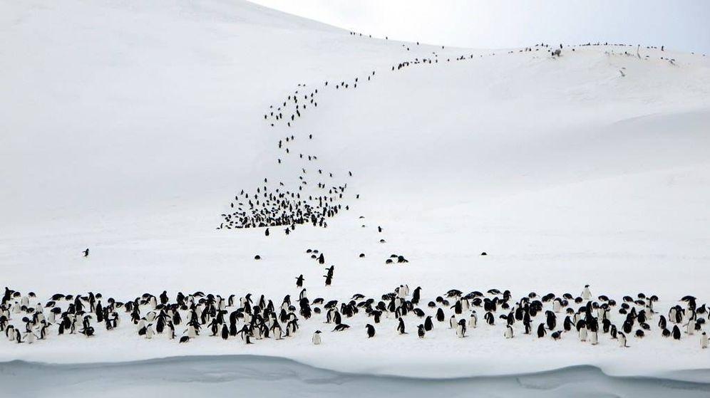 Foto: La misteriosa colonia de 1,5 millones de pingüinos que estuvo oculta 3.000 años. (CC)