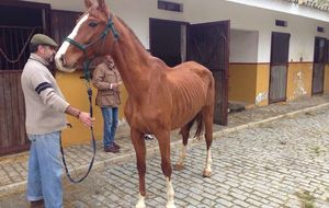 El estado de desnutrición de los caballos de Gil Salgado