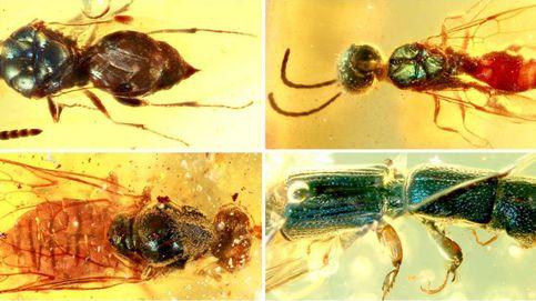 Así era el color de los insectos hace 99 millones de años