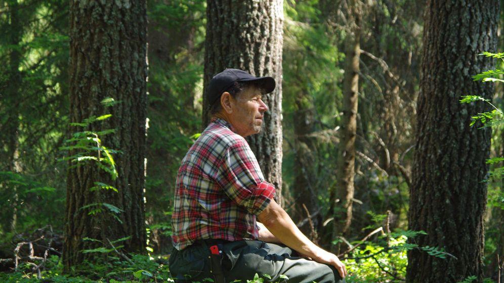 Foto: El ecologista Pentti Linkola en el bosque