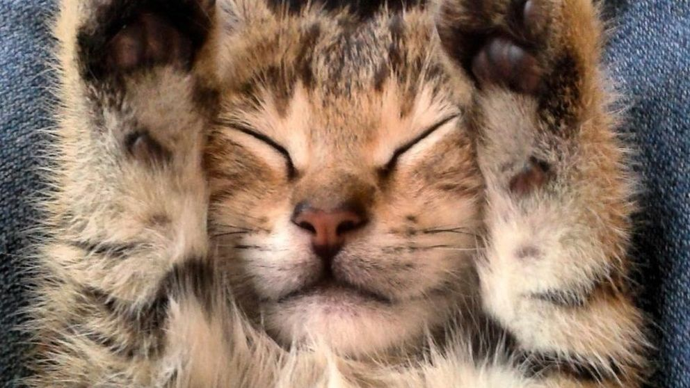 ¿Quieres acariciar y ronronear? Visita un café para gatos y déjate llevar