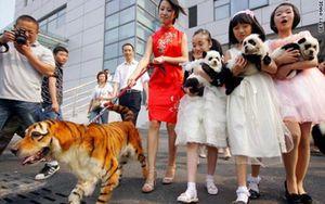 Foto: La última locura china: mascotas 'tuneadas' para que parezcan animales salvajes