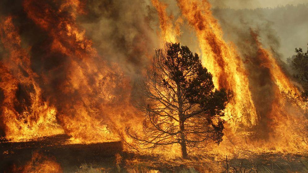 Incendios forestales: la ciencia detrás del fuego