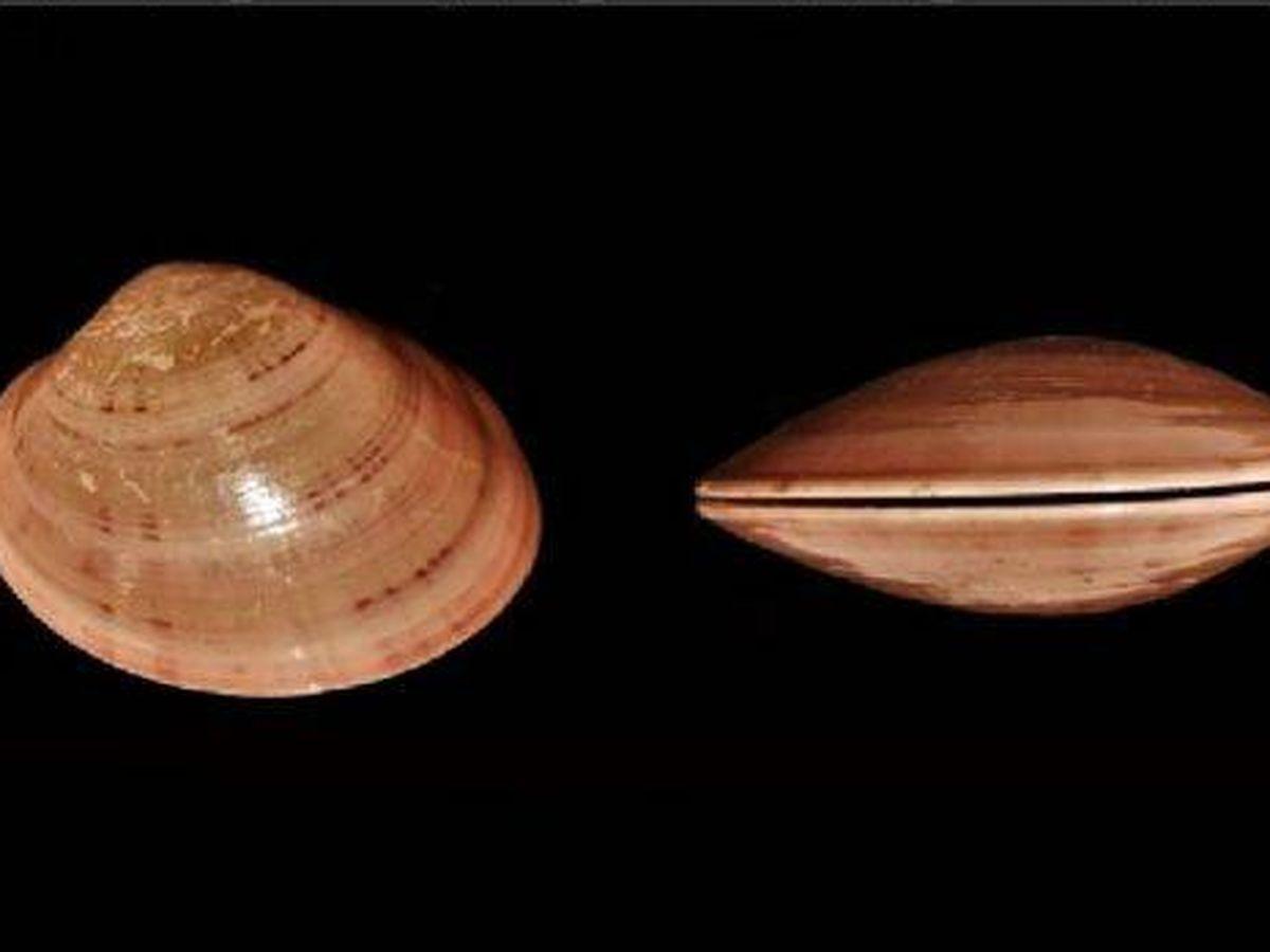 Foto: Restos de las conchas analizadas. (Plos One)