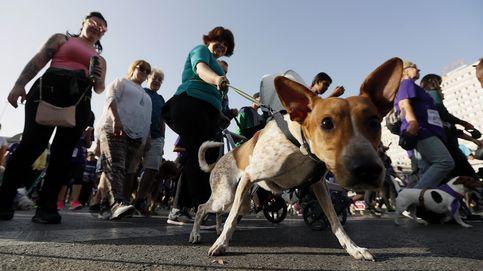 Los madrileños deberán gastarse 35 € en una prueba de ADN a sus 281.339 perros