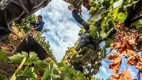 La 'burbuja' en el precio de la tierra para viñedos en la Ribera del Duero no toca techo