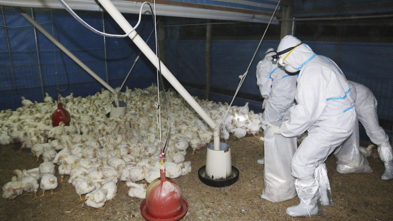 Francia prohíbe el foie gras durante tres meses por miedo a la gripe aviar