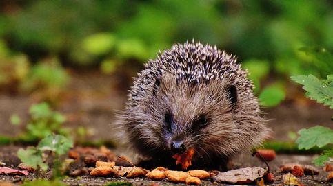 Varias especies animales en peligro en UK por la falta de regulación tras el Brexit