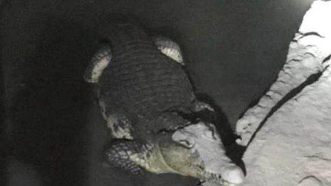 La Policía rusa registra un sótano en busca de armas... y se encuentra un cocodrilo
