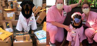 Post de Loki, la perra de terapia que ayuda a los sanitarios durante la pandemia