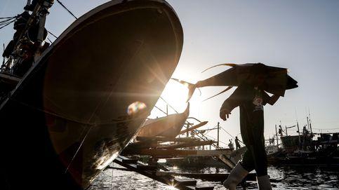 Intervienen un atún rojo pescado ilegalmente para venderlo en Marbella