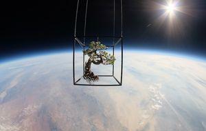 Bonsáis espaciales, el sueño de Felipe González