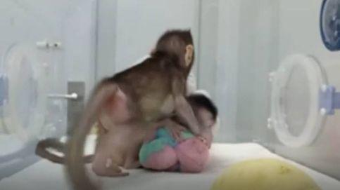 China anuncia la primera clonación de primates del mundo