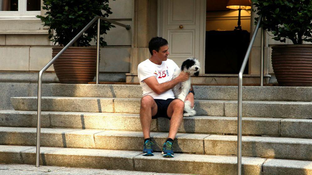 Foto: El presidente del Gobierno, Pedro Sánchez, acaricia a su perra en las escaleras de su residencia en Moncloa.