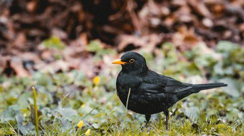 Vídeo: este es el canto general de la primavera  gracias a nuestras aves