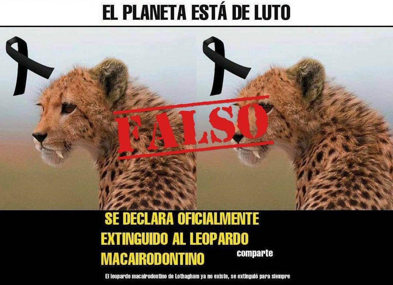 Foto: Anuncio del leopardo extinto