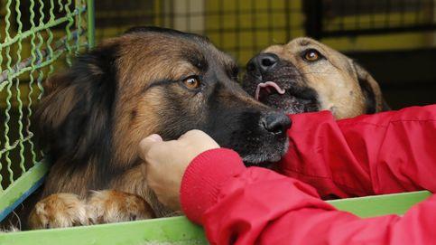 ¿En qué consiste la dieta BARF para perros? ¿Es saludable para tu mascota?