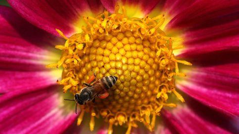Las abejas pueden resolver problemas matemáticos sin utilizar números