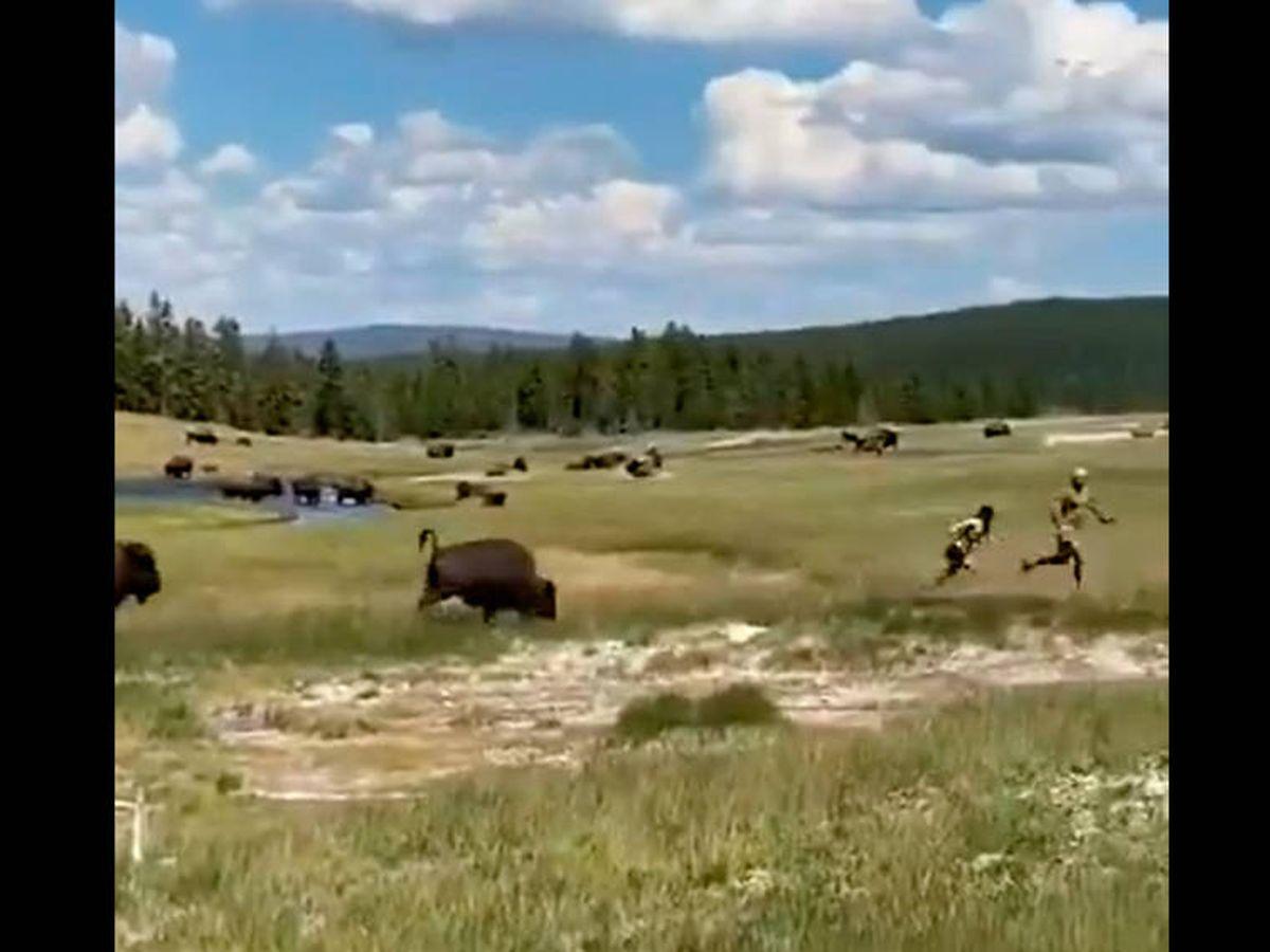 Foto: La mujer se hizo la muerta cuando el bisonte salió a por ella y su pareja (Foto: Twitter)