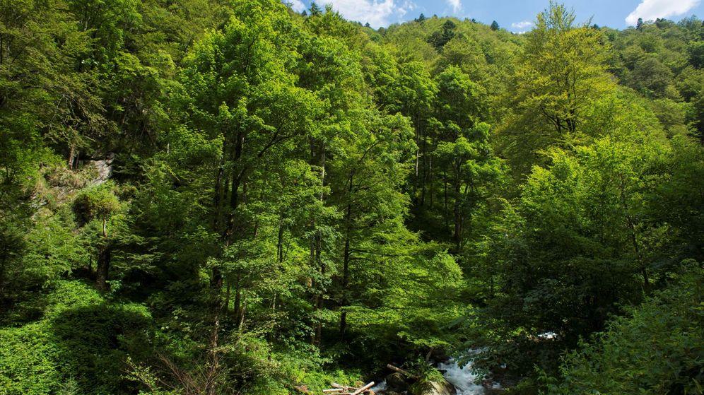 Foto: La tala indiscriminada amenaza uno de los mayores bosques vírgenes de Europa (EFE/Matthias Schickhofe)